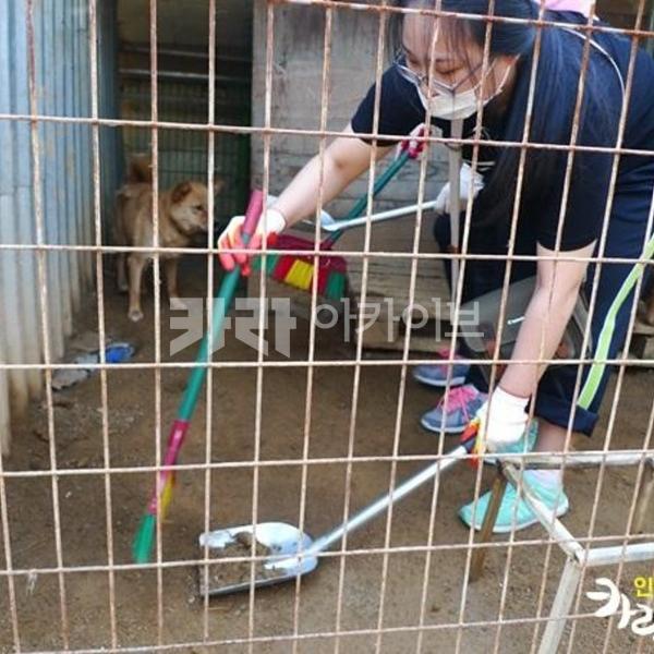 2013년 9월 인천 카라 서포터즈 봉사활동 - 누렁이 살리기 운동본부  [사진그림류]