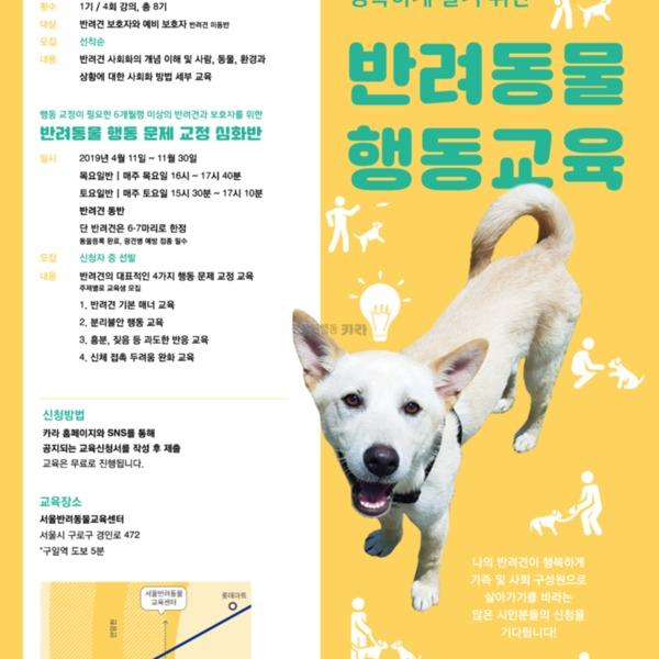 [포스터] 반려동물행동교육 포스터 [사진그림류]