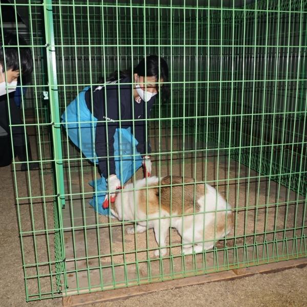 벌교 개농장 구조 프로젝트 즐겨찾기 이동 [사진그림류]