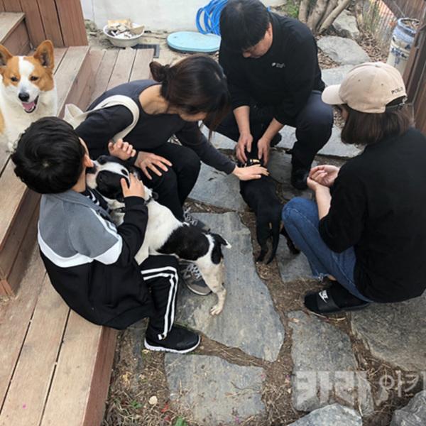 대전 가정폭력 카이 라이 구조 [사진그림류]