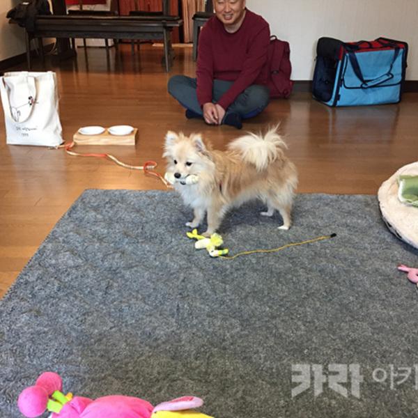(입양후기-개) 도치 [사진그림류]