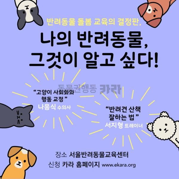 [웹플라이어] 반려동물행동교정웹이미지 [사진그림류]