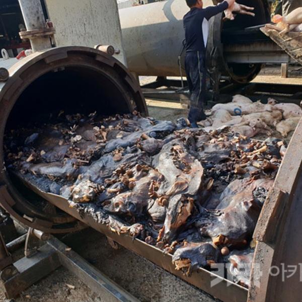 경남 사천 아기돼지 망치살해 사건(돼지 동물학대) [사진그림류]