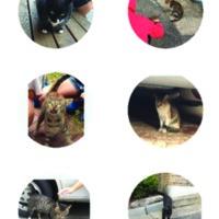 2015 찾아가는 동물보호교육 : 토끼똥공부방 : 묘한동네에서 공존하기 길냥뱃지 [문서류]