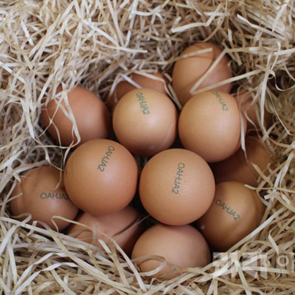 일리있는식탁 일리있는소비 동물복지농장 달걀 촬영 [사진그림류]