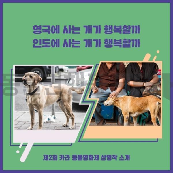 [카드뉴스]인도개vs영국개 거리의개들 [사진그림류]
