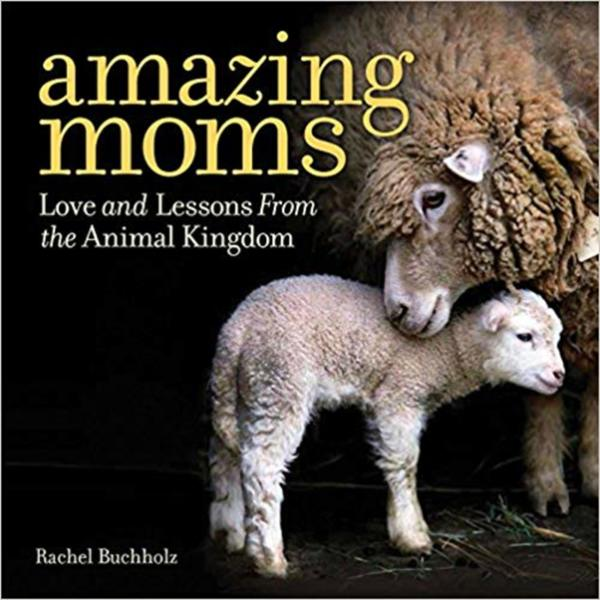 Amazing Moms : Love and Lessons from the Animal Kingdom [동물도서]