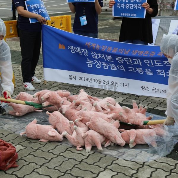 아프리카돼지열병관련 기자회견 [사진그림류]
