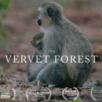 Vervet Forest [동물영화]