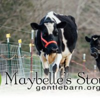 Maybelle's Story [동물영화]