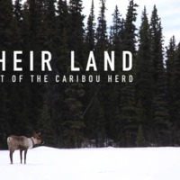 Their Land: Last of the Caribou Herd [동물영화]