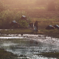 Elk River [동물영화]
