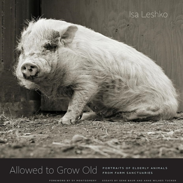 Allowed to Grow Old : Portraits of Elderly Animals from Farm Sanctuaries [동물도서]