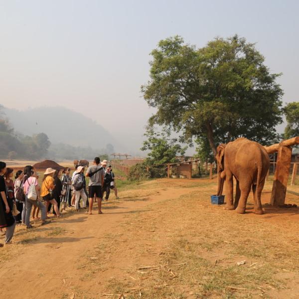 [2019.03.12 ~ 2019.03.16] 코끼리 친구들과 함께 하는 카라의 착한여행
