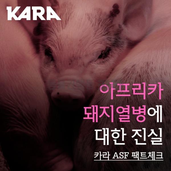 [카드뉴스] 아프리카돼지열병 팩트체크 [사진그림류]