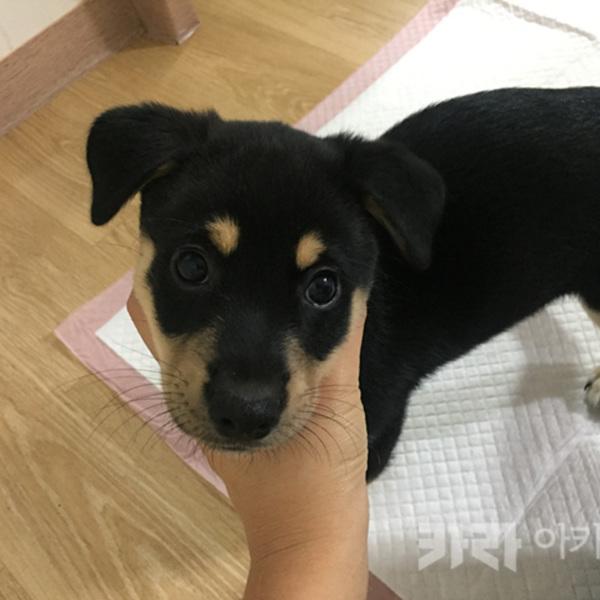 (입양후기-개) 슈랑 [사진그림류]