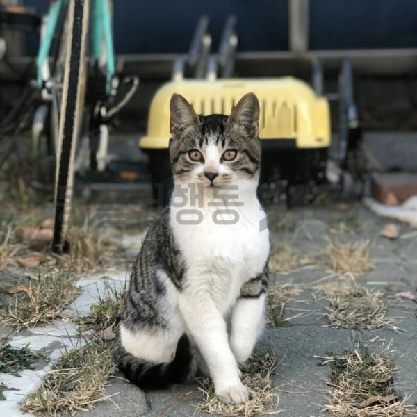 2019 전국 대학 고양이 심포지엄 전시 사진 [사진그림류]
