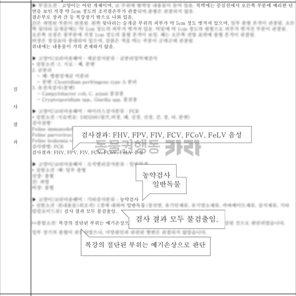 안양시 만안구 길고양이 10월 발생 사건 부검결과서 홈페이지 게시용 [사진그림류]