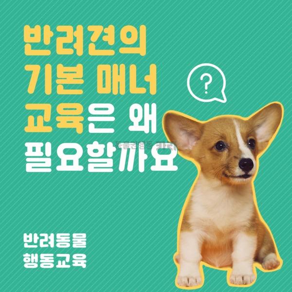 [카드뉴스] 반려동물 행동교육 기본매너 [사진그림류]