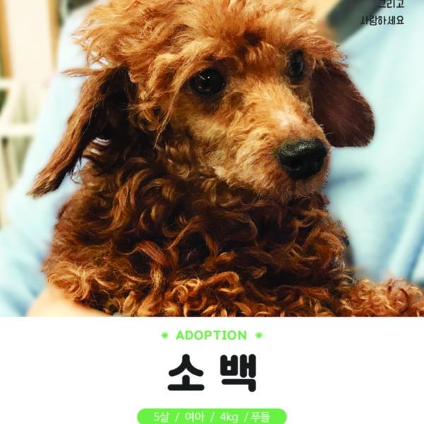 (입양행사) 달님입양파티(소리,소백) [사진그림류]