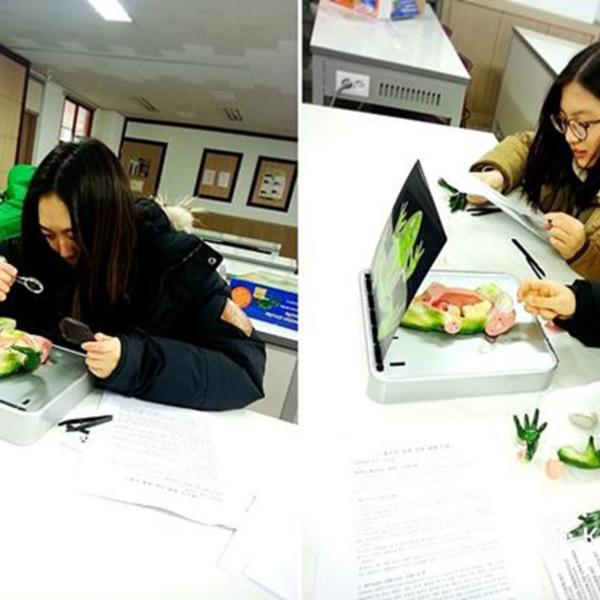 개구리모형교구대여 [사진그림류]