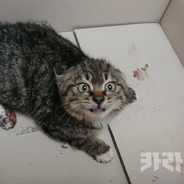 화천 군부대 쥐덫 고양이 호두 [사진그림류]