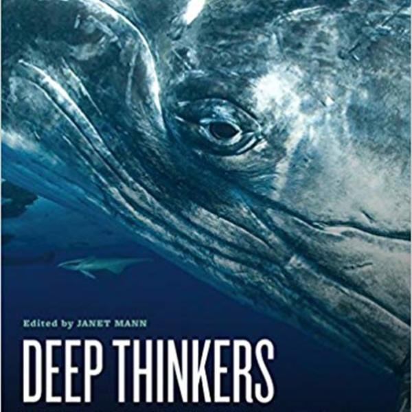 Deep Thinkers : Inside the Minds of Whales, Dolphins, and Porpoises [동물도서]