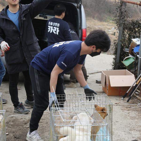 [2019.03.05] 벌교 폐업 개농장 구조 프로젝트 <뜬장에서 가정으로> 시작