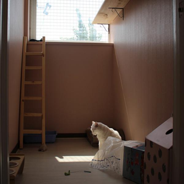한국고양이보호협회 입양센터 방문 [사진그림류]