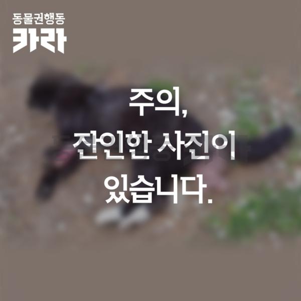 안양시 만안구 길고양이 학대 제보 사진 [사진그림류]