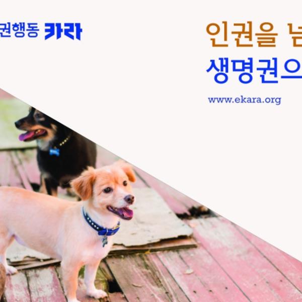 동물권행동 카라 소개서 [문서류]