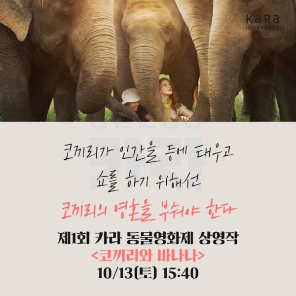 (카드뉴스) 제1회 카라 동물영화제(코끼리와 바나나) [문서류]