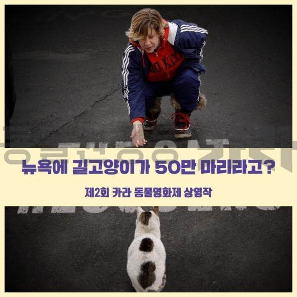[카드뉴스]고양이구조자들 홍보 [사진그림류]