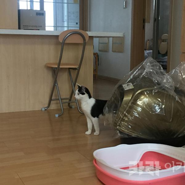 (입양후기-고양이) 금빛,달빛 [사진그림류]