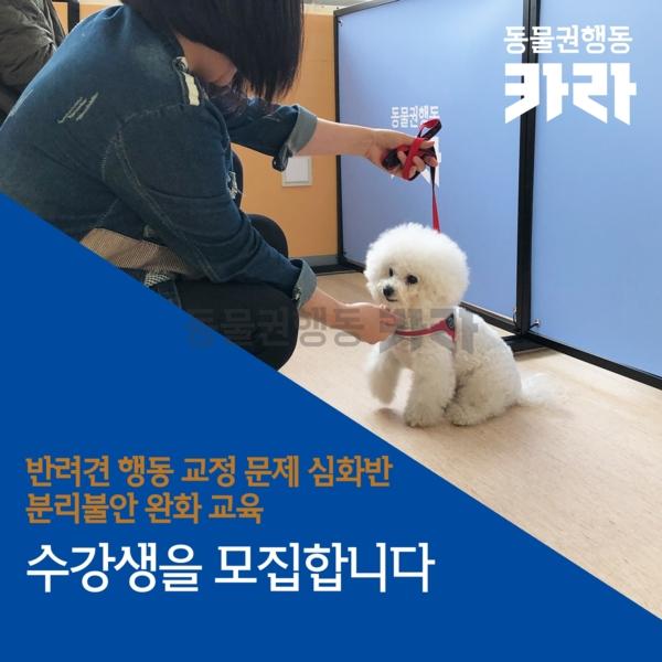 [카드뉴스] 반려견 행동문제 심화 모집 [사진그림류]