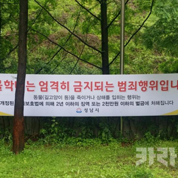 판교 동물학대 길고양이 궁금한이야기Y [사진그림류]