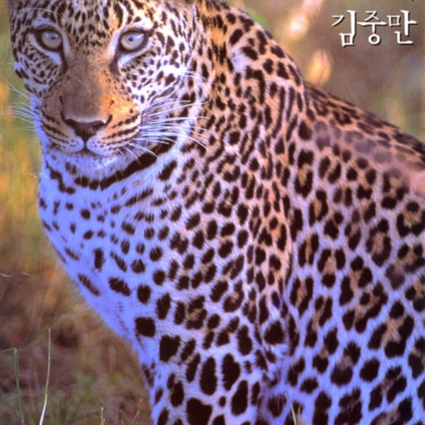 동물 왕국=Animals kingdom [동물도서]