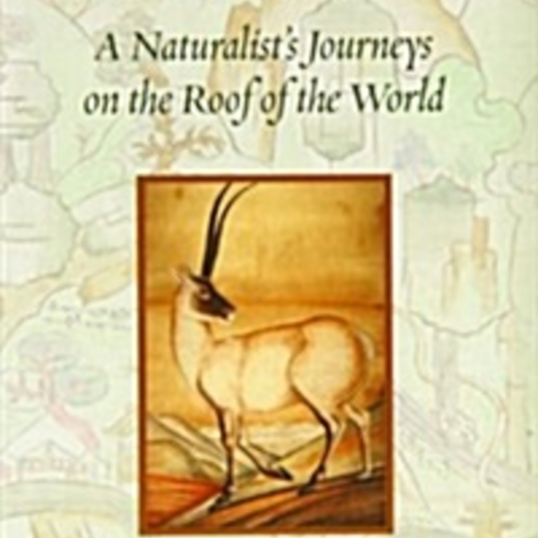Tibet Wild : A Naturalist´s Journeys on the Roof of the World [동물도서]