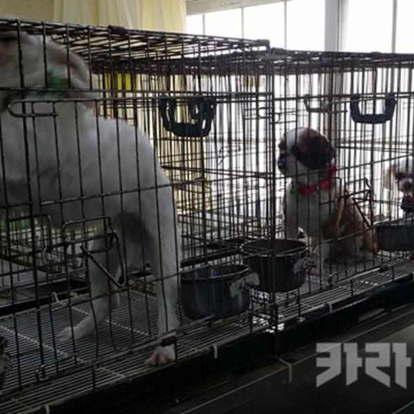 동물구조관리협회(동구협) 보호소 모니터링 [사진그림류]