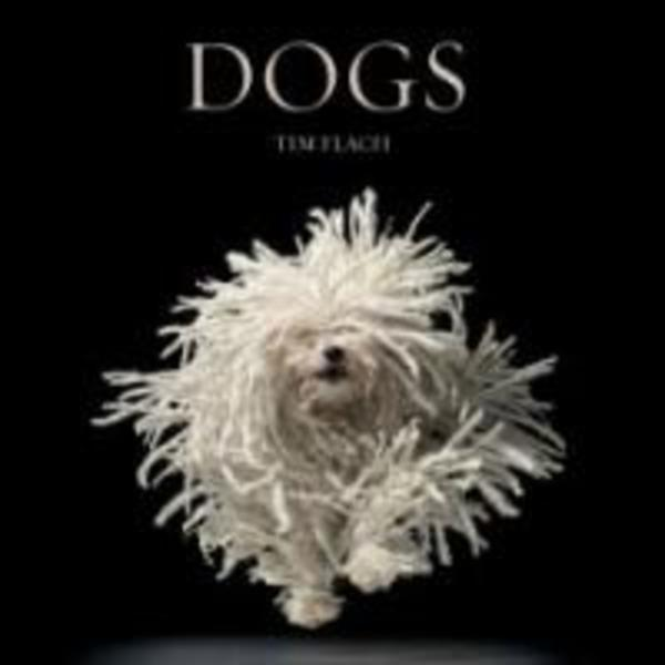 Dogs [동물도서]