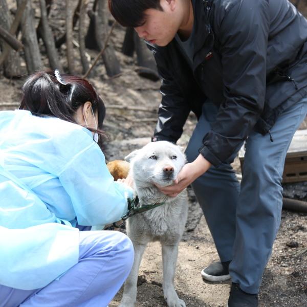 [2019.04.08] 강원 고성 산불 구조 활동, 동물을 위한 국가 대응 체계 마련 논평