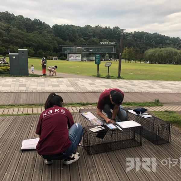 북서울 꿈의숲 길고양이 TNR 2차 [사진그림류]