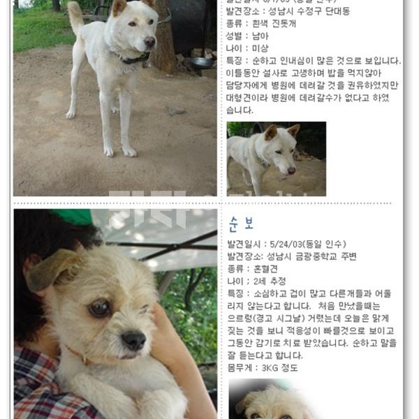 [2003.06.01] 경기도 분당 유기견 입양 프로젝트 및 유기동물관리방안서 제출