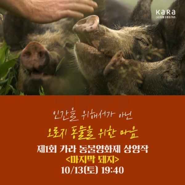 (카드뉴스) 제1회 카라 동물영화제(마지막 돼지) [문서류]