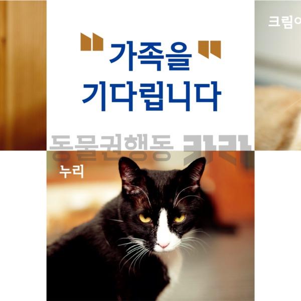 제10회 궁디팡팡 캣페스타 페트 출력물 [사진그림류]