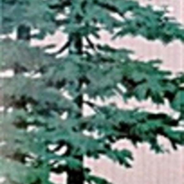 어느 인문학자의 나무 세기 : 역사와 신화 속에서 걸어나온 나무들 [동물도서]