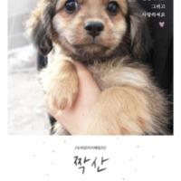 2016 슈퍼강아지패밀리 입양공고 : 반려동물, 사지마세요 입양하세요 그리고 사랑하세요 [사진그림류]