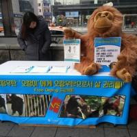 프리오랑 프로젝트 서명운동 현장 : 홍대입구역 9번출구 [사진그림류]