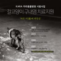 아픈 이(齒)에 희망을 : 카라동물병원 길고양이구내염치료지원 시범사업 포스터 [사진그림류]