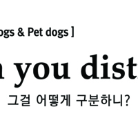 2013 카라 복날캠페인 : 지하철 광고 : How can you distinguish? [사진그림류]